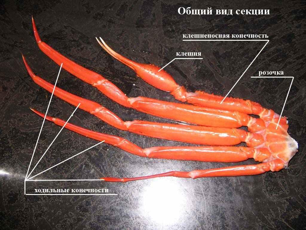 crabb forum
